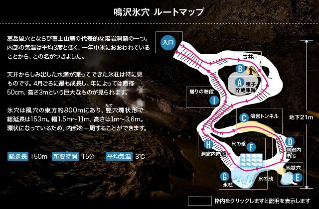鳴沢氷穴 ルートマップ 富岳風穴とならび富士山麓の代表的な溶岩洞窟の一つ。内部の気温は平均3度と低く、一年中氷におおわれていることから、この名がつきました。 天井からしみ出した水滴が凍ってできた氷柱は特に見ものです。4月ごろに最も成長し、年によっては直径50cm、高さ3mという巨大なものが見られます。氷穴は風穴の東方約800mにあり、竪穴環状形で総延長は153m。幅1.5m~11m、高さは1m~3.6m。環状になっているため、内部を一周することができます。 総延長150m 所要時間6~7分 平均気温3℃